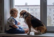 欧洲男孩和小猎犬看窗口 库存图片