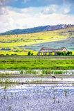 欧洲白色鹳在译员自然石灰岩地区常见的地形沼泽中,索菲亚州,保加利亚水  库存图片