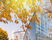 欧洲议会通过黄色叶子tre被看见的门面大厦 库存照片