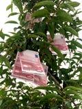 欧洲货币结构树 库存图片