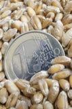 欧洲麦子 库存图片