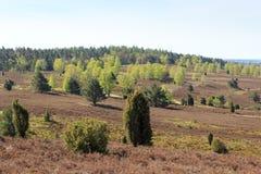 欧石南丛生的荒野从小山Wilseder冰山的全景视图在翁德洛,德国附近的Luneburg荒地 免版税库存照片
