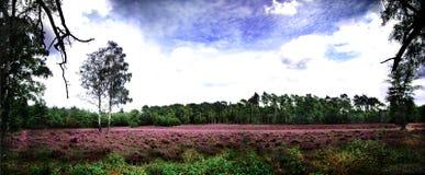 欧石南丛生的荒野全景 库存图片