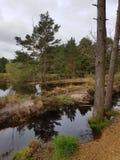 欧石南丛生的荒野 免版税库存照片