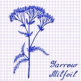 欧蓍草Achillea millefolium 在练习本背景的植物的图画 库存照片