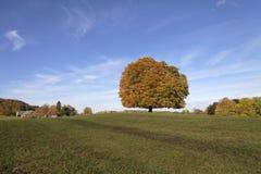 欧洲七叶树树(七页树属hippocastanum)七叶树果实树在秋天, Lengerich,北莱茵-威斯特伐利亚州,德国 免版税库存照片