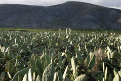 欧洲加那利群岛兰萨罗特岛 免版税库存图片