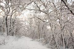 欧洲多雪的森林,季节性自然白色风景 库存照片