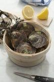 欧洲平面的新鲜的牡蛎 图库摄影