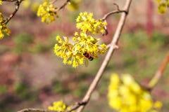 欧洲春天的秀丽 图库摄影
