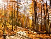欧洲森林在秋天 免版税库存图片