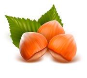 欧洲榛树叶子 库存图片