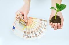 欧洲金钱和幼木在被隔绝的手上 库存图片