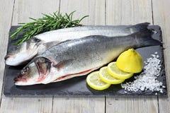 欧洲雪鱼 免版税库存照片