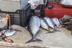 欧洲鱼 免版税库存图片
