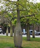 欧洲s结构树 免版税库存图片
