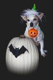 款待的小狗把戏在万圣夜 免版税库存图片