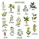 止痛的草本 手拉的套药用植物 向量例证