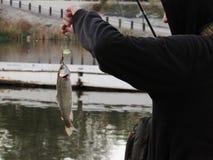阻止鱼的渔夫 图库摄影