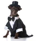 正式狗 免版税库存照片