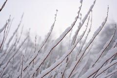 正是季节第一的雪 免版税库存照片