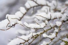 正是季节第一的雪 库存照片