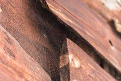 正确形式的蜘蛛网在一个木结构的 免版税库存照片