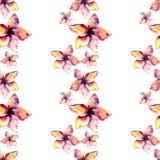 正确的美好的招标使一朵热带浅粉红色和黄色花复杂的可爱的热带夏威夷花卉夏天样式 向量例证