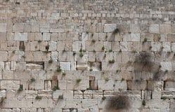 正统犹太人祈祷在西部墙壁 图库摄影