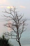 此外落叶树美丽的海滩 免版税库存图片