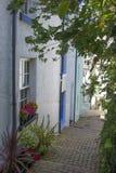 步和植物Brixham Torbay德文郡Endland英国 免版税库存照片
