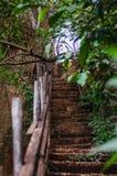 步在导致在acliff旁边的森林里 免版税库存照片