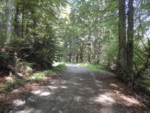 步行到森林里 库存照片