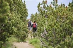 步行在一座高山的游人,在杉木森林里 免版税库存照片