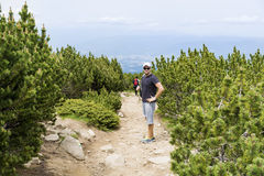 步行在一座高山的游人,在杉木森林里 免版税库存图片
