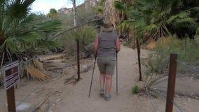步行在与棕榈树的绿洲的活跃肥胖成熟妇女在莫哈维沙漠 股票录像