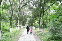 步行在公园 库存图片