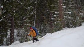 步行在冬天森林里的背包徒步旅行者 影视素材
