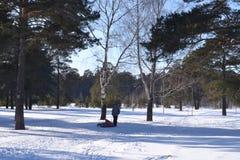 步行在冬天森林 免版税库存照片