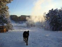 步行在冬天森林 免版税库存图片