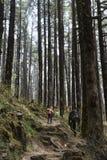 步行在山古老森林里的两个人 库存照片