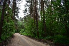 步行在杉木森林充电您激动正面 图库摄影