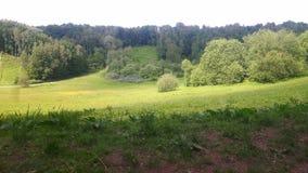 步行在森林里在一个晴天 免版税图库摄影