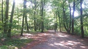 步行在森林里在一个晴天 免版税库存照片