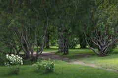 步行在植物园里 免版税图库摄影