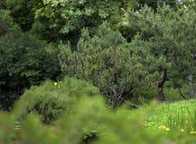 步行在植物园里 免版税库存图片