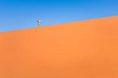 步行在沙丘的冒险的人旅客在纳米比亚 免版税库存照片