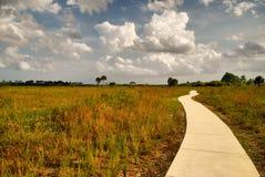 步行在沼地 库存照片