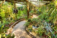 步行在热带庭院里 库存图片