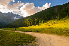 步行在田园诗风景的背包徒步旅行者 夏天冒险和探险在阿尔卑斯,通过开花的草甸和绿色森林地 免版税库存照片